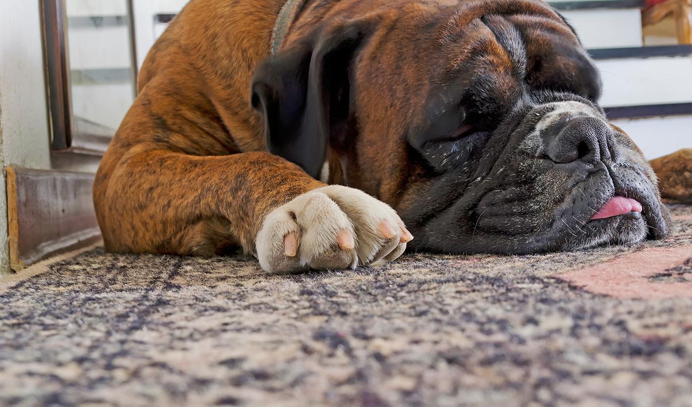 Tulsa Carpet Pet Cleaning