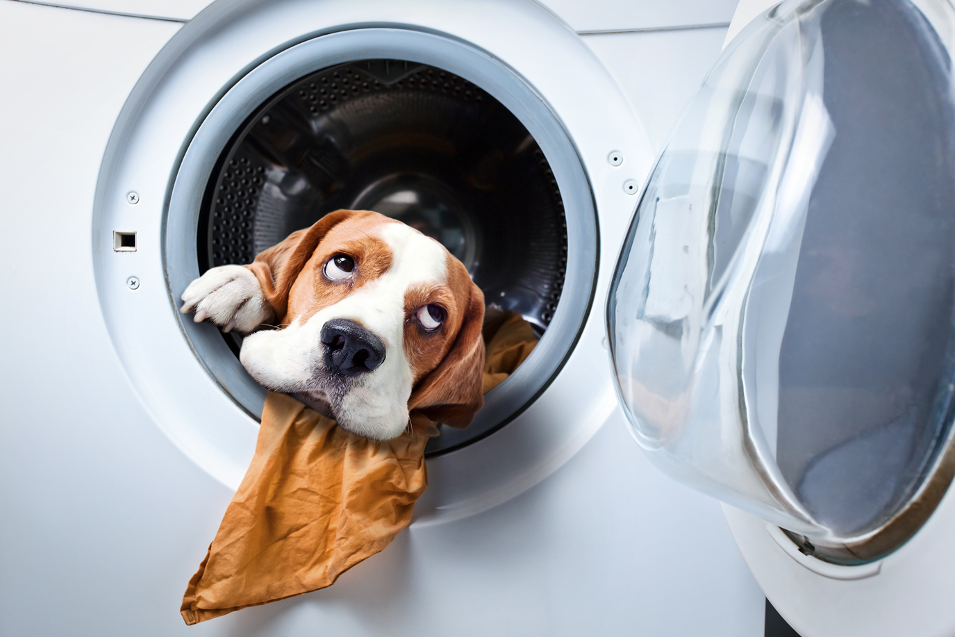 Pet Stain Removal Specialists in Tulsa