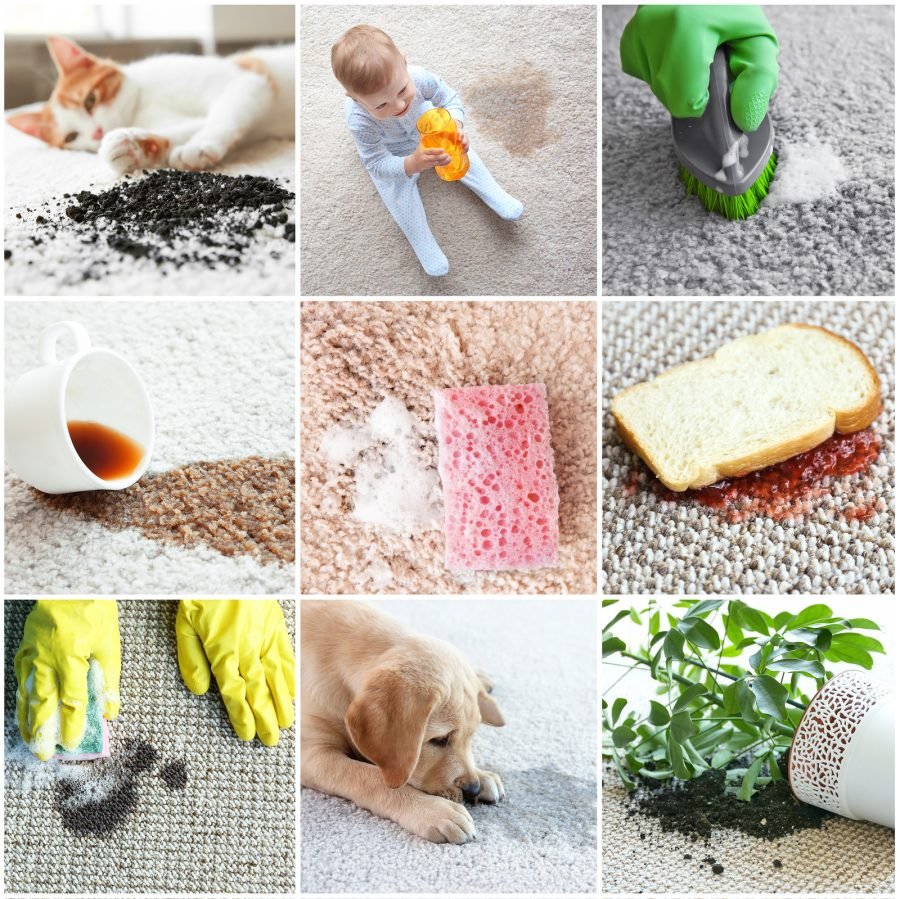 Carpet Protection 5 Reasons To Protect Your Carpet Dynamic