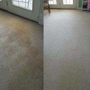 Before and After Capet Cleaning