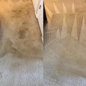 Tulsa Carpet Stain Removal
