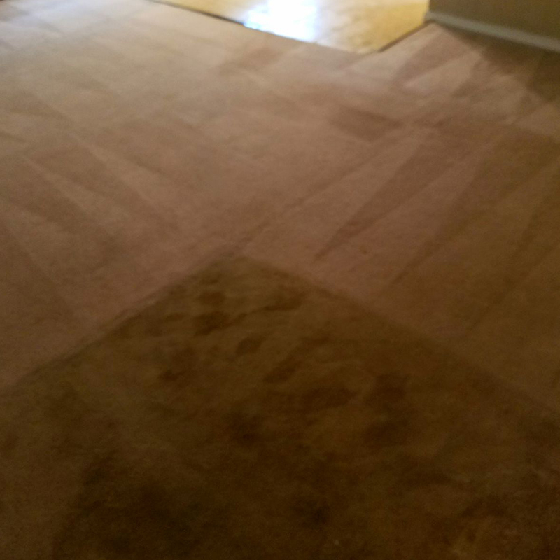 Dynamic Carpet Care Before and After