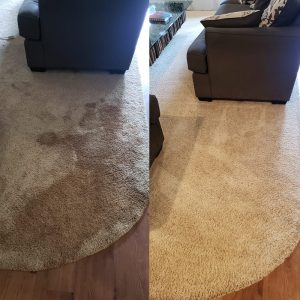 Before After Carpet Care