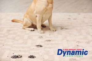 Soiled Carpets by Your Best Friend