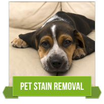 Tulsa Pet Stain Removal